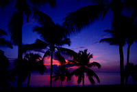 St. Croix Palm Tree Sunset West End Bay